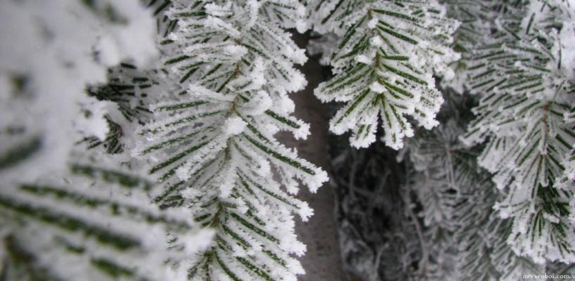 Весна близко: какая погода ждет омичей в феврале