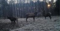 Зона оживает. Ученые смогли сфотографировать вернувшихся в Чернобыль животных