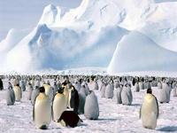 Путин собирается в Антарктиду