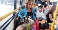 В Омске на автобусе прокатился пони