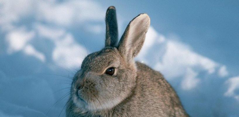 В Омской области охотник погиб, добивая зайца прикладом