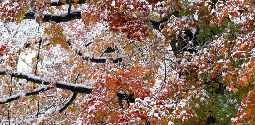 Пора подумать о резине: снег в Омске выпадет уже на следующей неделе