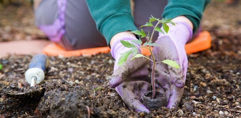 В Омске открылась ярмарка для садоводов «Весенний сад»