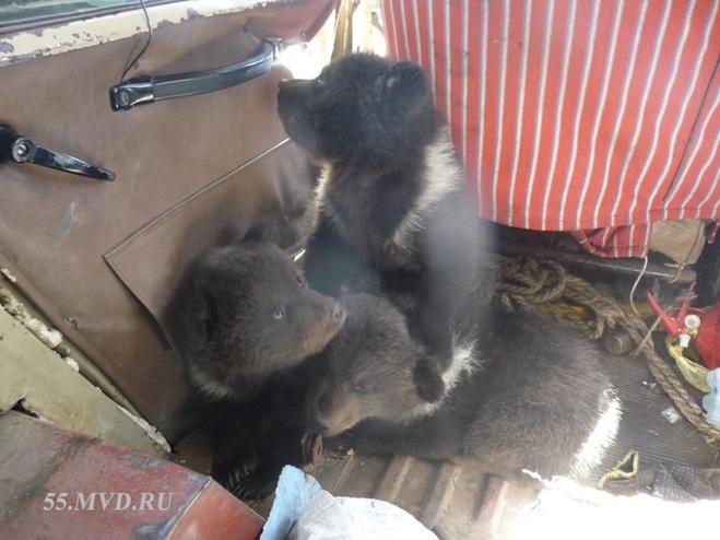 За содержание медвежат без документов Большереченский зоопарк заплатит 10 000 рублей