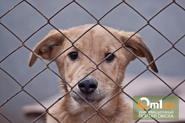 Омская мэрия требует закрыть приют для животных «Друг»
