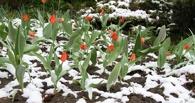 Омские синоптики обещают ночные заморозки