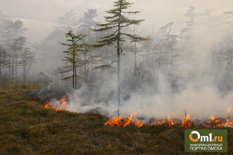На севере Омской области горят болота