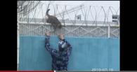 Попытка бегства провалилась: сотрудники колонии спасли кота, забравшегося на забор