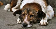 В Омске собаку застрелили из окна многоэтажки