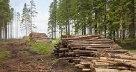 В Омской области депутат воровал лес у соседнего лесхоза