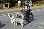 Как провести выходные в Омске: гонки на собаках и ужин с хоккеистами «Авангарда»