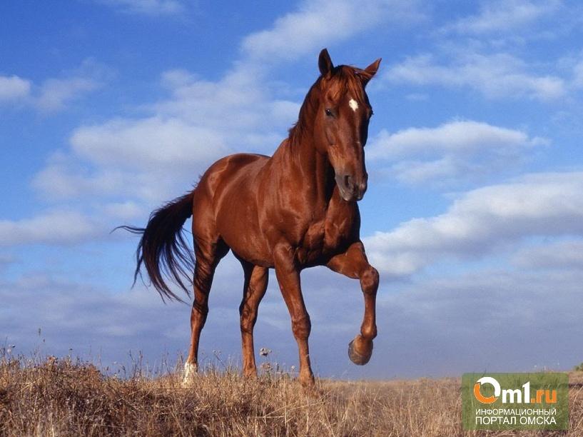 В Омской области лошадь чуть не убила 3-летнего мальчика