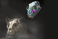 Ученые нашли в Тибете останки предка львов и тигров