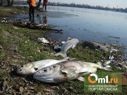 """Рыба в Птичей гавани могла погибнуть из-за стоков канализации """"ОмскВодоканала""""?"""