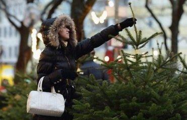 «Яндекс» показал точки продажи легальных елок в Омске