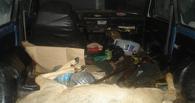 В Омской области задержаны странные охотники