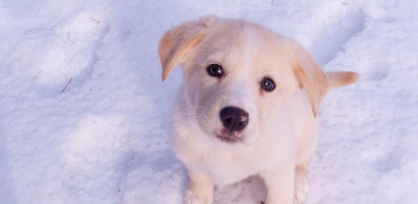 В Омске снегом завалило маленьких щенков