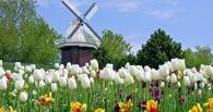 Прощайте, тюльпаны. Россельхознадзор запретит импорт цветов из Европы