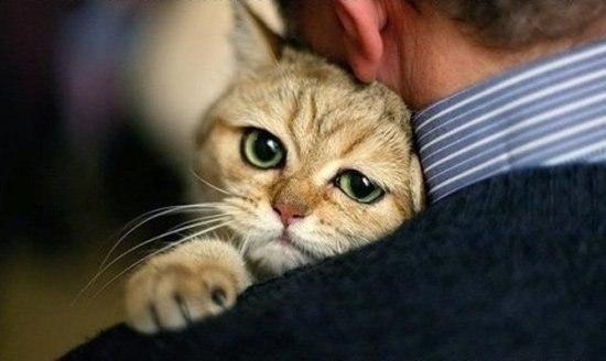 В Омской области живодер отрубает котам хвосты