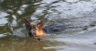 В Омске 7-летний мальчик утонул, пытаясь спасти собаку