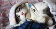 Роспотребнадзор: омичи стали меньше болеть гриппом и ОРВИ