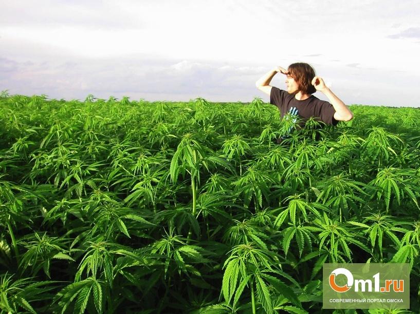 Омские наркополицейские отняли у наркомана 1,5 кило марихуаны