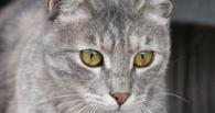 В правительстве Омской области появился свой кот