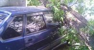 Упавшее у омского Дома актера дерево «наказало» любителя парковки на газоне