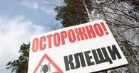 Клещи в Омске могут проснуться уже в первой декаде апреля