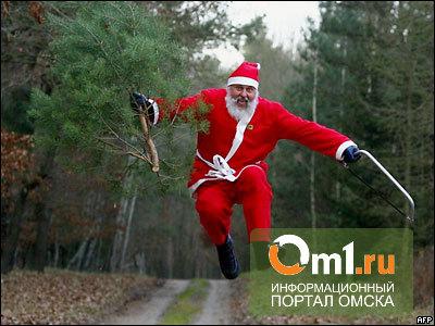 В Омске черные лесорубы зарабатывают на продаже елок