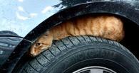 Конструкцию LADA Kalina хотят поменять из-за кошек