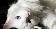 Как Хатико: в Омске кот больше недели не покидал больного хозяина