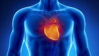 Российские ученые создали цифровое сердце