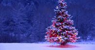 В Омской области начали заготавливать новогодние ели