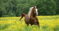 В Омской области украденную лошадь обменяли на автомобиль