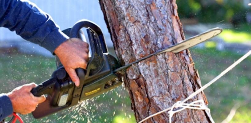 Омичи подали в суд на мэрию из-за вырубки деревьев