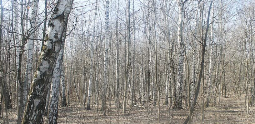 В Омске расследуется дело о незаконной вырубке городского леса