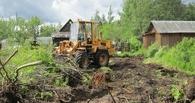 Чтобы расширить дорогу, житель Омской области срубил 55 деревьев