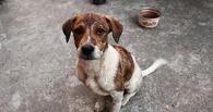 Прокуратура потребовала от правительства Омской области выделить деньги на отлов собак