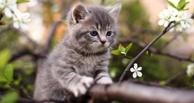 В Омске всю ночь спасали котенка, просидевшего на дереве 6 дней