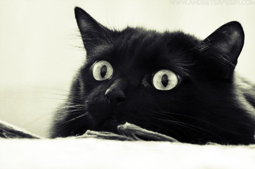 Жителю Томской области придется выплатить 40 000 рублей за кота, который разбил чужую машину