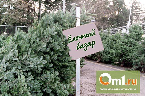 В Омске на этой неделе начнут продавать елки