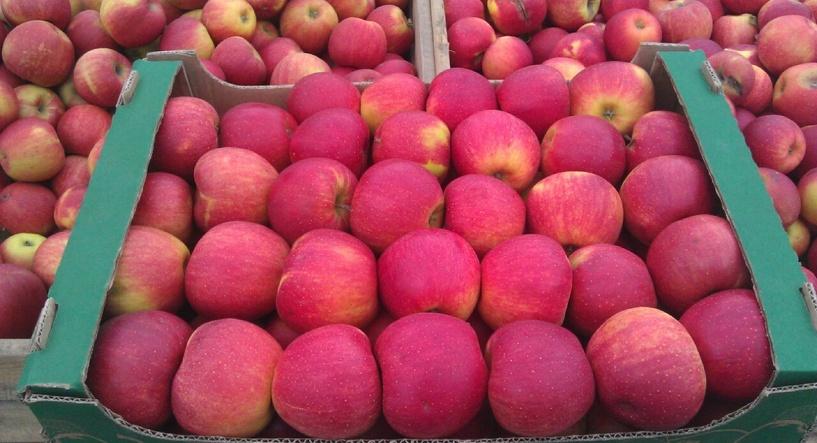 В Омск незаконно пытались ввезти 19 тонн молдавских яблок