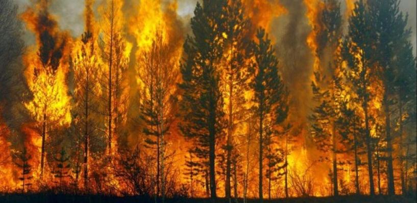 В Омской области потушили уже два лесных пожара