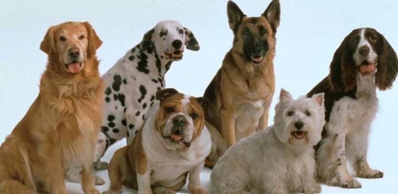 В Омске у пенсионерки украли 30 собак