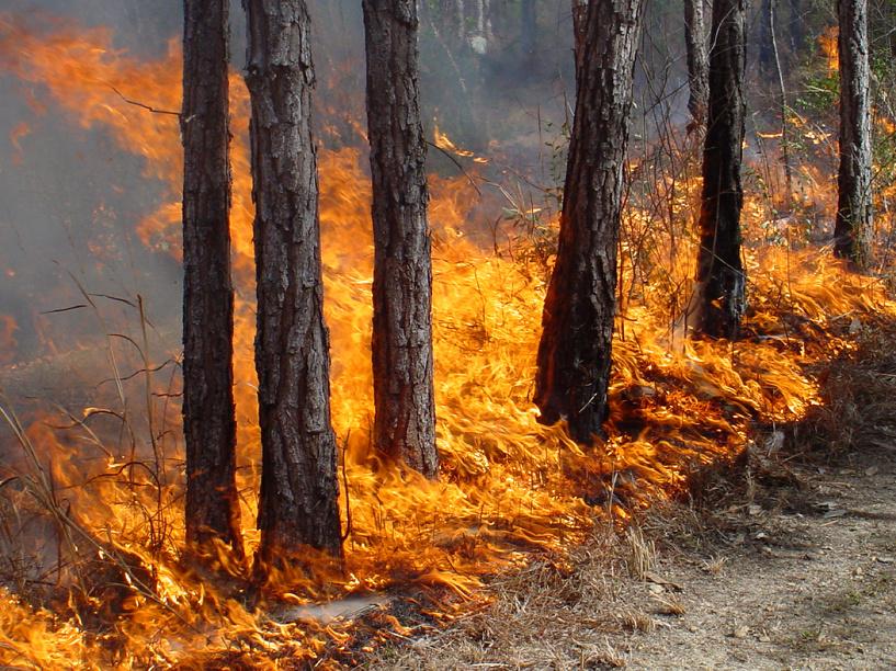 Двое омичей, поджигая сухую траву, уничтожили 10 га леса