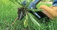 В Омской области фермера оштрафовали за сорняки на пашне