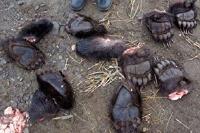 В Китае двух россиян могут казнить за контрабанду лап медведей