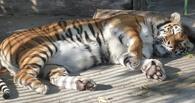 Большереченский зоопарк готовится к юбилею