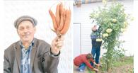 В Омской области выросли морковка-мутант и гигантский георгин
